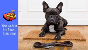 Walking Your Dog During Quarantine