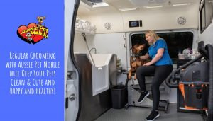 Regular Grooming with Aussie Pet Mobile will Keep Your Pets Clean & Cute and Happy and Healthy