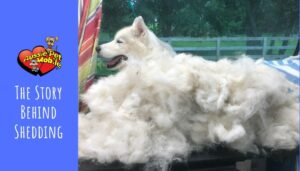 The Story Behind Shedding